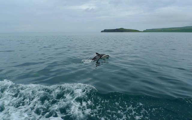 Dolphins, Loch Dunvegan, Boat Trips, Isle of Skye